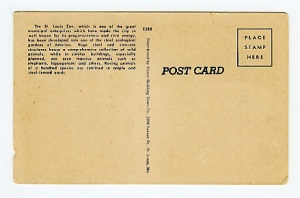 vintage zebra postcard, back view